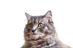 Cat Looking fotos de archivo
