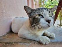 Cat Looking Fotografia de Stock Royalty Free