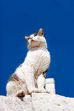 Cat looking from above Royalty Free Stock Images