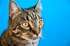 Cat looking Stock Photos
