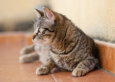 Cat looking aside Royalty Free Stock Photos
