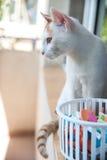 Cat Looking Away Imagen de archivo libre de regalías