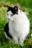 Cat looking away against green background Royalty Free Stock Photos