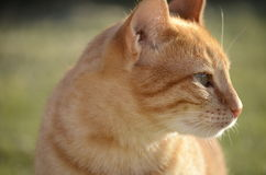 Cat looking away Stock Images