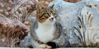 Cat looking away in Ephesus Stock Photo