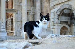 Cat looking away in Ephesus Stock Images