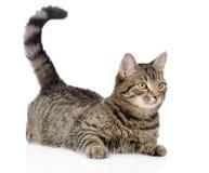 Cat Looking Away Geïsoleerdj op witte achtergrond stock afbeeldingen