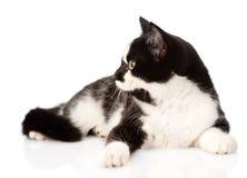 Cat Looking Away Geïsoleerdj op witte achtergrond royalty-vrije stock foto's