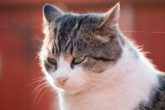 Cat Looking Away Portrait Stockbild