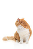 Cat looking back Royalty Free Stock Images
