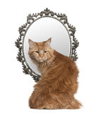 Cat looking back with a mirror in background Royalty Free Stock Image