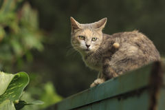 Cat looking back. A Cat is sitting on a bin and looking back Royalty Free Stock Images