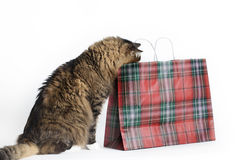 Cat looking into Bag Stock Images