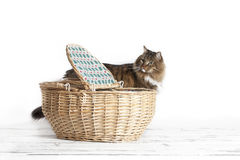 Cat Looking at Basket Royalty Free Stock Photography