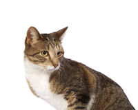 Cat Looking Behind Stock Images