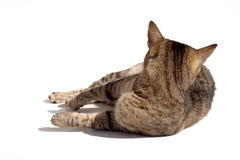 Cat looking behind Stock Photos