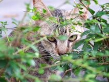 Cat is looking from behind a tree Stock Image