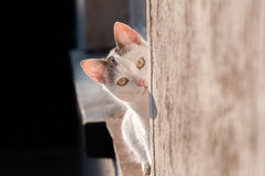 Cat looking Stock Photography