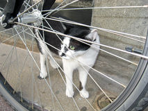 Cat looking through bicycle wheel Royalty Free Stock Photos
