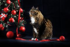 Cat Looking bij Kerstboom Stock Foto's