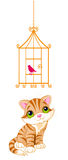 Cat looking at the bird cage Stock Image