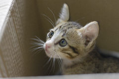 Cat looking. Cat in the box is looking something Royalty Free Stock Images