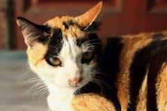 Cat looking Stock Photo