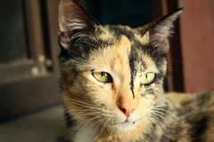 Cat looking Royalty Free Stock Photography
