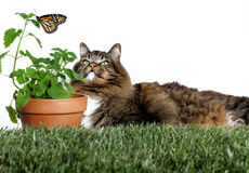 Cat looking at Butterfly Stock Photos