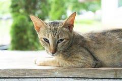 Cat Looking At Camera foto de archivo