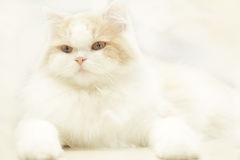 Cat Looking At Camera royalty-vrije stock fotografie
