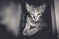 A cat looking at camera. Black & white style picture Stock Photo