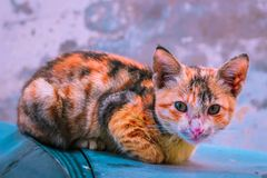 Cat is looking at camera. The cute cat is sitting on car and looking at camera stock photo