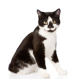 Cat looking at camera. isolated on white background Stock Photography