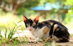 Cat Looking At Camera Stock Photos