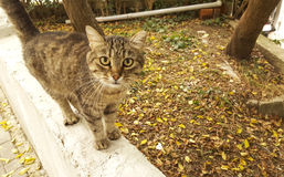 Cat. Looking At Camera on the street Royalty Free Stock Photography