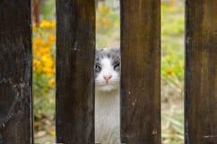 Cat looking at camera Royalty Free Stock Photos