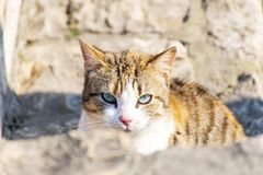 Cat looking at the camera. Yellow cat with blue eyes staring in to the camera royalty free stock images
