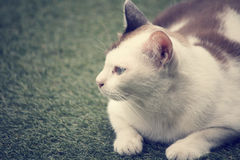 Cat looking. Royalty Free Stock Images