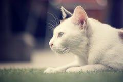 Cat looking. Stock Photo