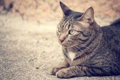 Cat looking. Stock Image