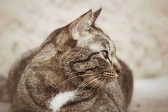 Cat looking. Stock Photography
