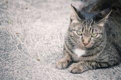 Cat looking. Stock Photos