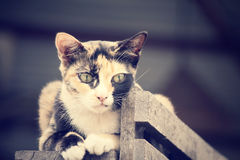 Cat looking. Stock Images