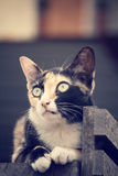 Cat looking. Royalty Free Stock Image