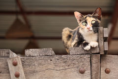Cat looking. Royalty Free Stock Photo