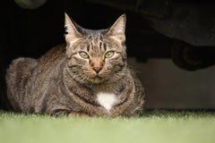 Cat looking. Royalty Free Stock Photos