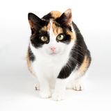 Cat looking curious into the camear, isolated in white Stock Photos