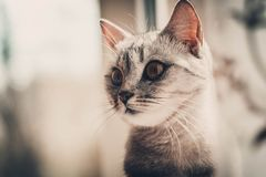Cat. Looking into the distance stock photos