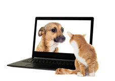 Cat looking at dog Stock Images